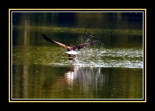 Pic of Eagle landing framed